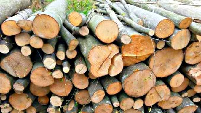 Românii nu mai au voie să se încălzească cu lemne
