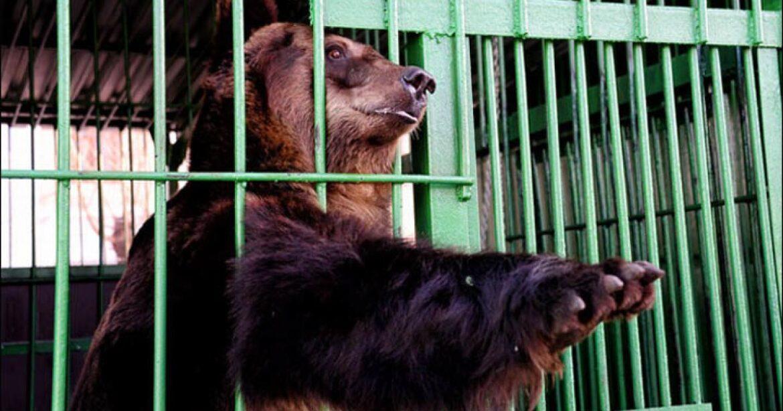Proiect de lege din partea PNL: Animalele de la Zoo vor putea fi vândute pentru sacrificare, vânătoare și circ